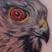 Tattoos - Sharpshin Hawk - 15769